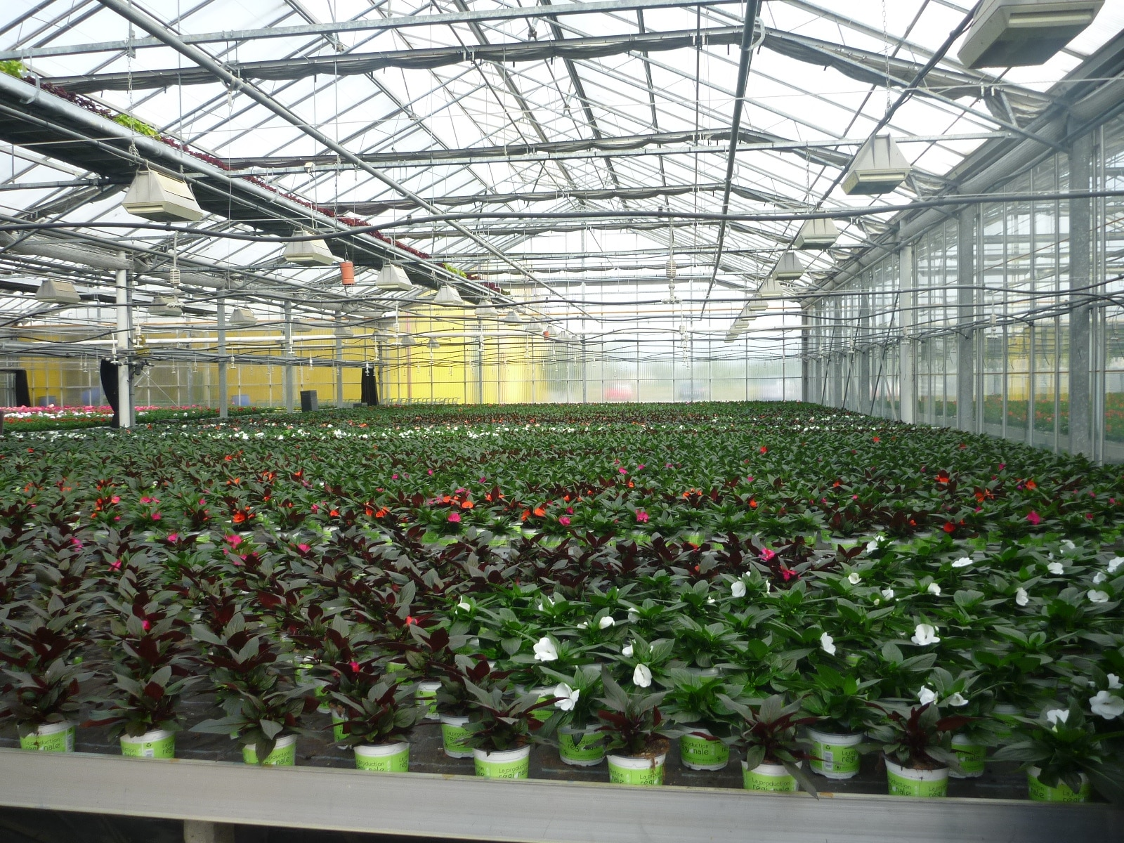 Que Planter En Octobre Sous Serre bilan carbone / acv des fleurs et légumes produits sous