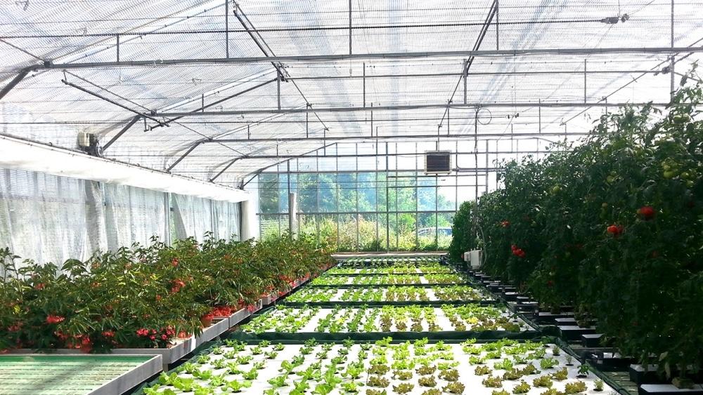 aquaponie serre agrithermic