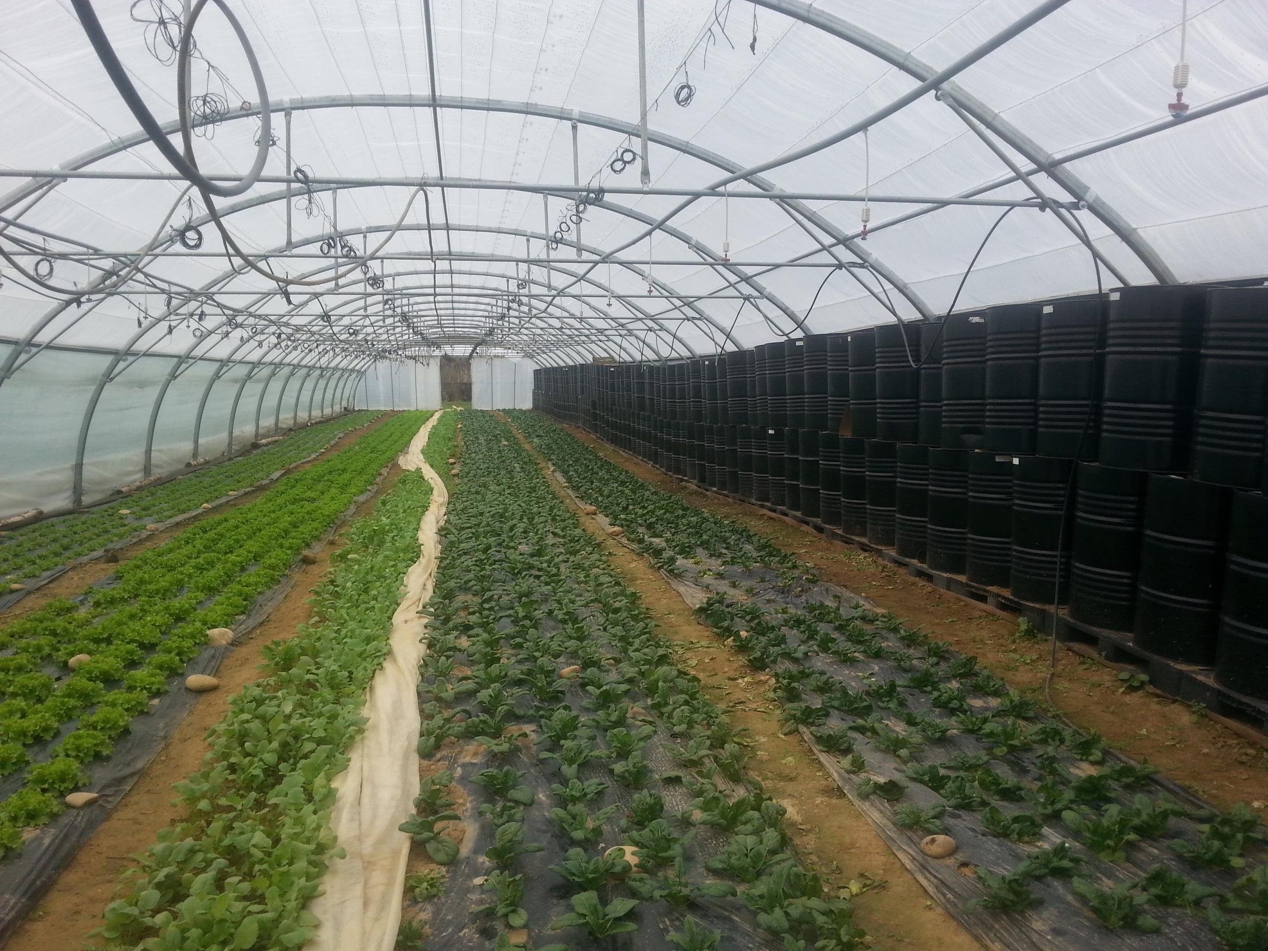 Que Planter En Octobre Sous Serre retours sur les expérimentations précocité et climat sous